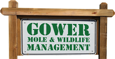 Gower Mole & Wildlife Management